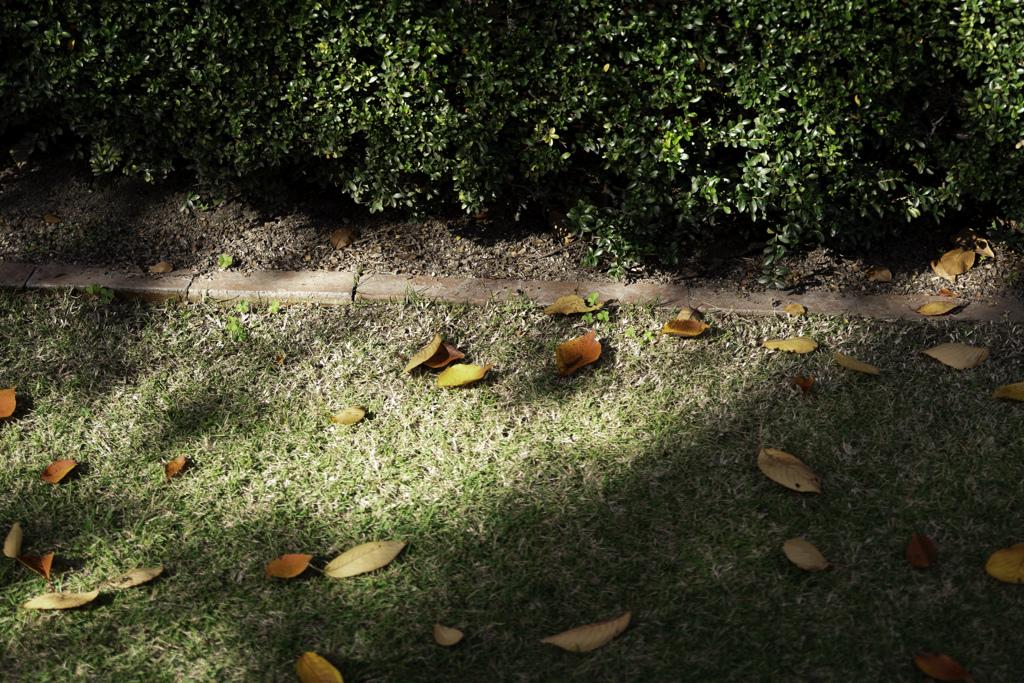 落ち葉に木漏れ日