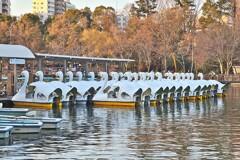 井の頭恩賜公園 スワンボート