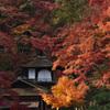 聴秋閣の秋