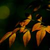 秋の気配 名月まで1週間