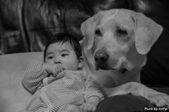 孫を抱く愛犬