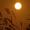 初秋の夕光