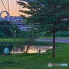 夕暮と池と犬とおじさんたち