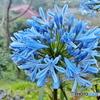 阿里山の風景‐花の名知らず