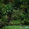 台北植物園(苗圃)の池03