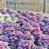 2005年冬中国南部の風景06