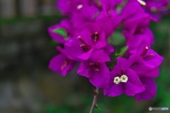 路傍の花たち03