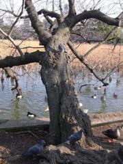スズメのなる木の全貌