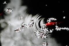 白・黒・赤-波紋