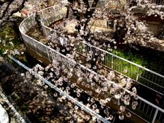 春の歩道橋