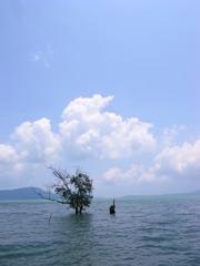 海になる木