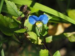 雑草の花5