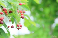 June berry2