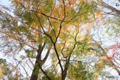 秋のブレンド