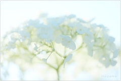June flowers10
