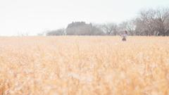 冬の牧草畑