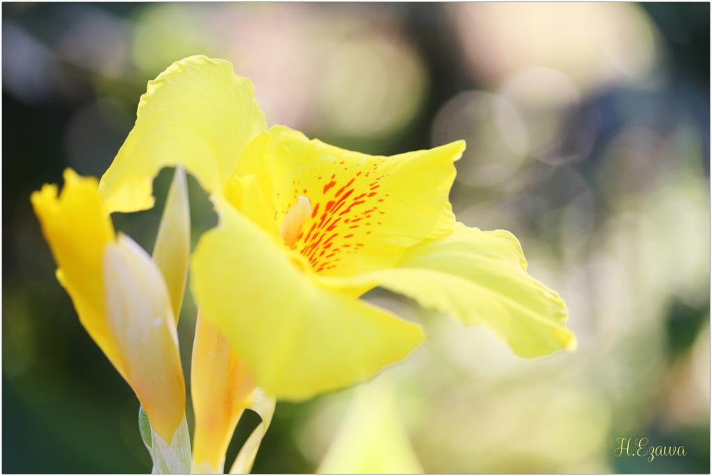牧場に咲く花