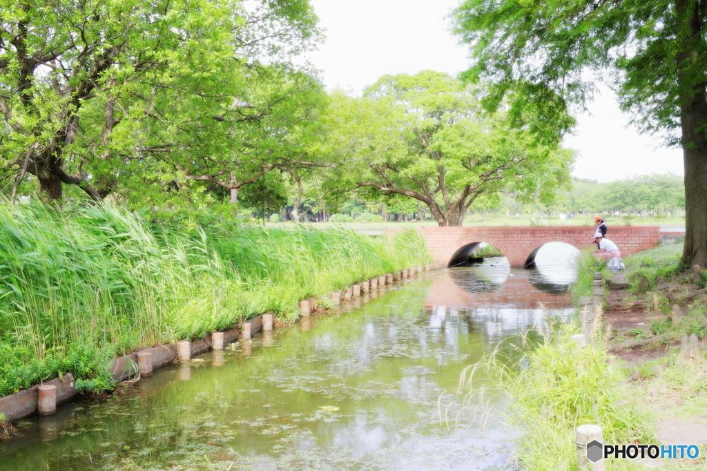 昼下がりの水辺