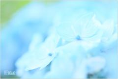 June flowers3