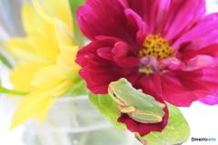 花とアマちゃん