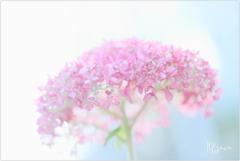 June flowers8