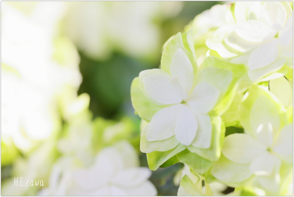 June flowers2