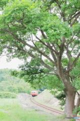 大きな木の下を