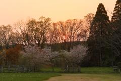 牧場の落陽