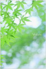5月の緑Ⅱ