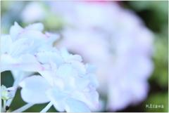 June flowers4