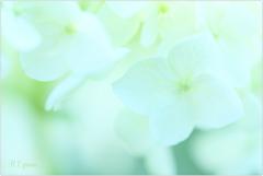 June flowers7