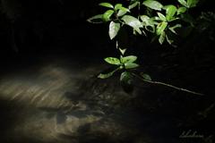木漏れ日の池Ⅱ