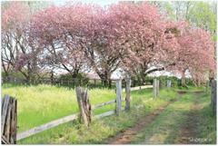 牧場の春Ⅱ