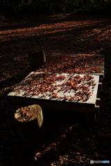 森のテーブル