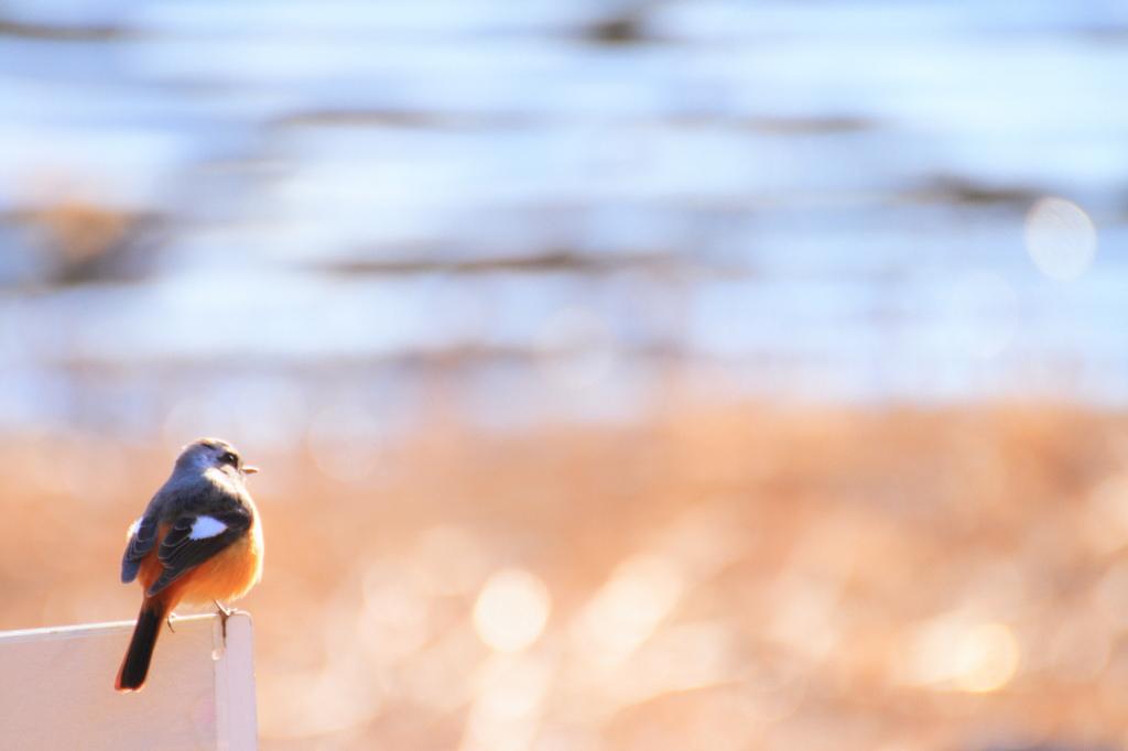 水辺のジョビ