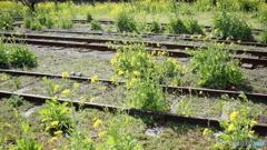 駅いっぱいの春