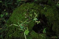 ちいさな緑の世界