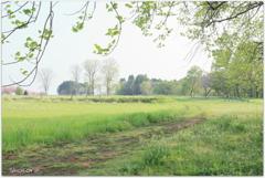新緑の牧場