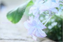 June flowers5