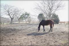 冬の牧場Ⅱ