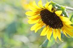 Little summer flowers3