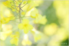 芽キャベツ(ブリュッセルスプラウト)