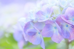 Light purple gradation