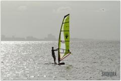 Yellow sail-2