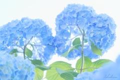 Blue of June