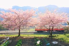 春の光の中を
