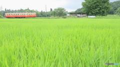 田園駅の緑