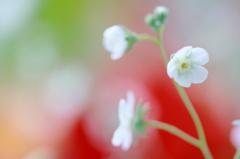 ちいさな花