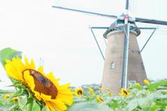 オランダ風車と向日葵Ⅱ