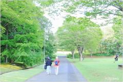 緑の散策路
